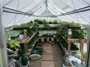 Backyard Greenhouses
